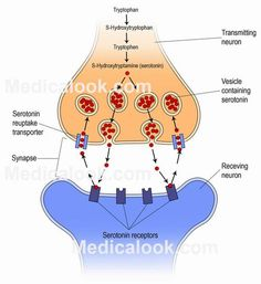 NEUROTRANSMITTERS - Norepinephrine, which is also known as noradrenaline, is released by the neurotransmitters of the autonomic nervous system by most of the postganglionic neurons. #neurotransmitters  #HumanAnatomy #Medicalook