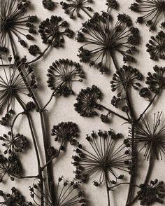 fleurs séchées peintes