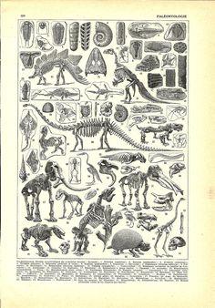 Vintage DINOSAUR PALEONTOLOGY poster - French dictionary plate Illustration - 1922. $11.00, via Etsy.