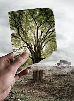 Art and photography such as this can have a big impact on society. Photographs like these allow people to realize the kind of destruction of our environment is happening. This picture is also an example of a clear cut deforestation technique where all trees are cut to the trunks in a large section of land. This can be the most harmful kind of deforestation because it completely disrupts the ecosystem killing all plants and making animals flee.