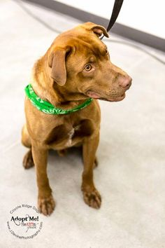 Rusty wants to go home with you!  Isn't he gorgeous!