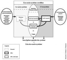 Figure 7. – Représentation schématique de l'éco-socio-système corallien.