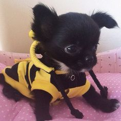 Buzz buzz, I'm a bee! I'll sting you with my cuteness.
