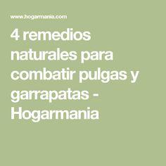 4 remedios naturales para combatir pulgas y garrapatas - Hogarmania