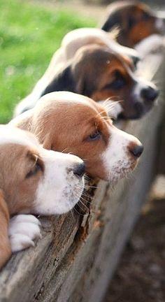 puppy row....