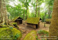 Albino village -- mossy (but not quite mossy enough) :) #ATime2Die #NadineBrandes
