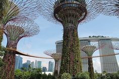 Don't you hate it when ultimate guides turn out to be not so ultimate? I hope to avoid that fate with this list of things to do in Singapore — surely my two years as an expat in the Lion City makes me something of an authority. Does it deserve to be