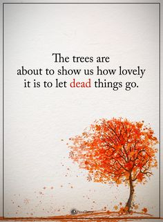 The trees are about to show us how lovely it is to let dead things go. #powerofpositivity #positivewords #positivethinking #inspirationalquote #motivationalquotes #quotes #life #love #hope #faith #respect #tree #lovely #grow #dead #show
