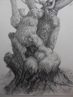 viejo castaño. Grafito, Papel Cansón. 35x25