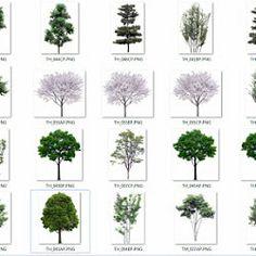 colección de árboles con fondo transparente [png] | arq+recursos.