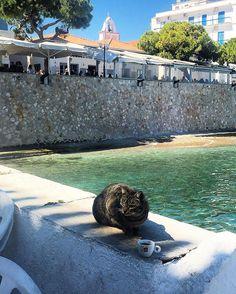 Cats of Spetses Niagara Falls, Funny Cats, Greece, Nature, Travel, Greece Country, Naturaleza, Viajes, Funny Kitties