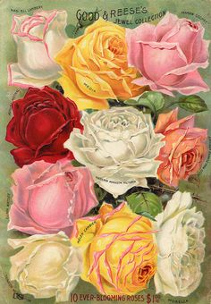 Good & Reese's Roses Vintage Catalogue
