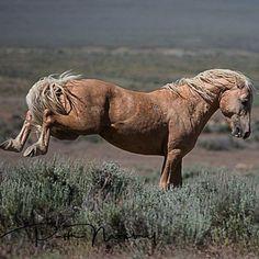 Beautiful Horses, Animals Beautiful, Cute Animals, Free Horses, Wild Horses, Horse Photos, Horse Pictures, Barrel Racing Quotes, Gypsy Horse