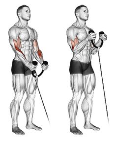 biceps workout Create a sculpted back and build your biceps with this amazing workout. This article is going to take you through one of many beneficial back and biceps workouts. This mu Back And Bicep Workout, Forearm Workout, Back And Biceps, Bicep Cable Workout, Weight Training Workouts, Gym Workout Tips, Fun Workouts, At Home Workouts, Workout Fitness