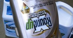 Monsantos Herbicide Linked to Fatal Kidney Disease Epidemic: Could It Topple the Company?
