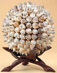 Sputnik Urceus Shells.  I have three of these