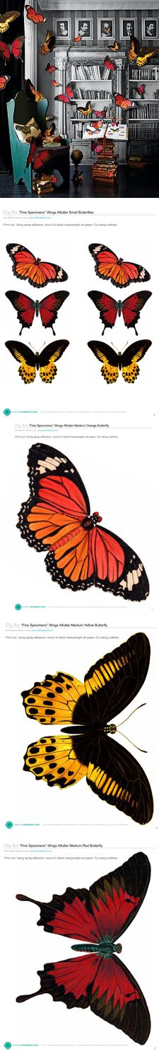 DIY large Clip-Art Butterfly Specimens #free #printable http://www.marthastewart.com/907940/clip-art-butterfly-specimens Video showing how to make them: http://www.marthastewart.com/249681/clip-art-butterflies