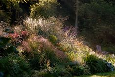 Revised and updated: June 2014 Whether an amateur or professional gardener it is all too easy to have a garden full of wonderful plants, which presents itself as a restless plant collection rather than a well thought out design with a sense of unity and wellbeing. In this course you...