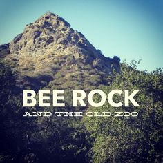 Bee Rock juts above the western mountainside of Griffith Park. The sandstone outcrop is pocked with holes, and with the shape, it looks a bit like a beehive. This is a short hike with over 600 ft of total vertical gain, and a fascinating swing through the Old Los Angeles Zoo. While the old zoo …