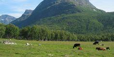Emblemático viaje para conocer Noruega en vacaciones - http://www.absolutnoruega.com/emblematico-viaje-para-conocer-noruega-en-vacaciones/
