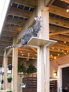 Cat Tree House, Cat Tree Condo, Cat Condo, Outdoor Cat Tree, Cat House Outdoor, Cat Climbing Wall, Feral Cat House, Crazy Home, Cat Perch