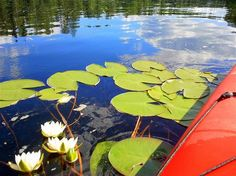 Kanu Ausflug nach Kanttura - show - Rundreisen Water Lilies, Beautiful Landscapes, Trekking, Fairy Tales, Golf Courses, How To Memorize Things, Places To Visit, Lily, Nature