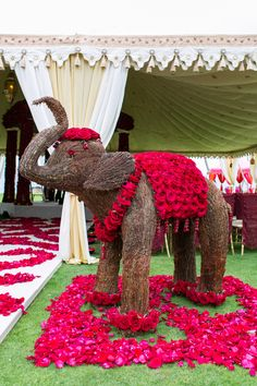 Roses and elephants