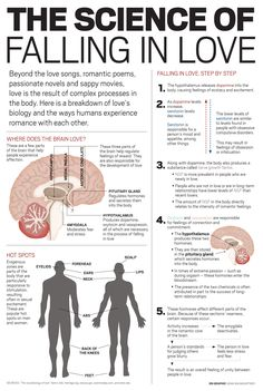 Your Brain on Love [infographic] | MeetMindful