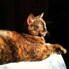 Lois sunbathing