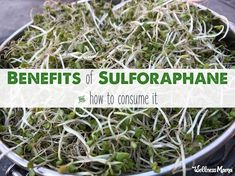 Benefits of Sulforaphane