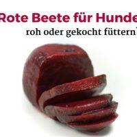 Rote Beete für Hunde roh oder gekocht füttern?