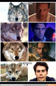 If Stiles were a werewolf Teen Wolf Scott, Teen Wolf Mtv, Teen Wolf Boys, Teen Wolf Dylan, Dylan O'brien, Teen Wolf Memes, Teen Wolf Quotes, Teen Wolf Funny, Teen Wolf Fan Art