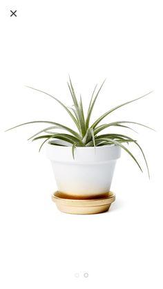Ombré white and gold planter pot