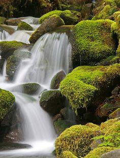 Waterfall, Hoh rain forest, Olympic peninsula. Moss and water; wonderful combination.