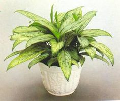 1000 images about garden inspiration on pinterest - Plantas ornamentales de interior ...