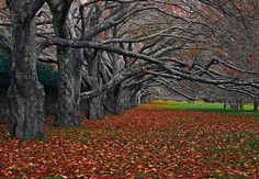 Enchanted ~by Peter Lik Fine Art Photography