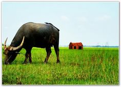 Chùm ảnh: Độc đáo chùm ảnh con trâu quê tôi ảnh 19 Elephant, Animals, Animaux, Animal, Animales, Elephants, Animais