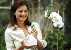 Orchidea 36 cose fondamentali da sapere