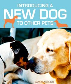 Introducing a New Dog to Other Pets ♥ Loved and pinned by Noah's Ark Mobile Vet Service | 250-212-5069 | Kelowna #dogs #pets