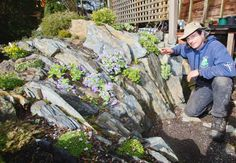 Rock stars for your garden: Alpine plants and crevice gardening are making a comeback
