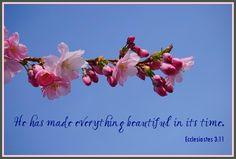 Everything Beautiful - Ecclesiastes 3:11