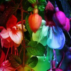 Tony Wenzel photography Rainbow glow