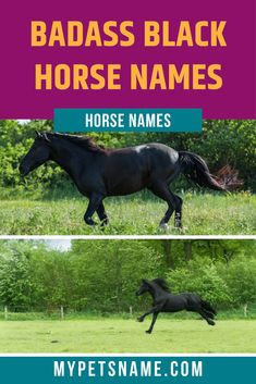 If you are not keen on choosing from popular names, or trends, then our list of badass black horse names are definitely for you. These names will have your horse stand out from the other horses in the pen, highlighting their true star quality. Cool Pet Names, Badass Names, Horse Names, Name List, Black Horses, Trends, Popular, Star, Pets