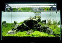 Favourites: display tank at Aquaeden ShopBeautiful and well balanced iwagumi style at one of the best aquascaping shops in Lisbon, Portugal. Follow them on their facebook site here.
