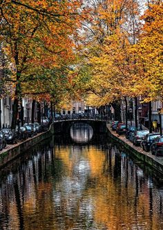 15 Photos That Prove The Netherlands is Stunning During Autumn|Pinterest: theculturetrip