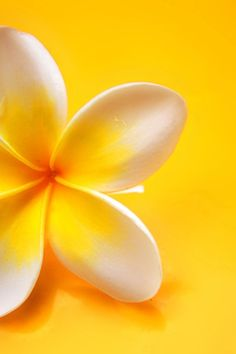 Plumeria.  Hawaiian Tropic Suntan Oil smells like it. They are easy to grow in Texas.