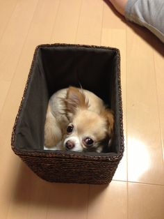 He likes in the box.