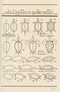 turtle comparison and how to draw. One of several drawing guides from the same pinner.