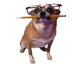 slimme hond - Google zoeken