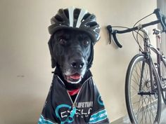 #dog #cycling #sport